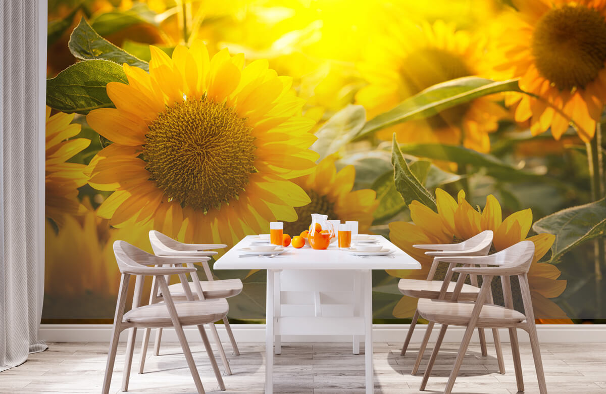 Bloemen, planten en bomen Zonnebloemen en zon 2
