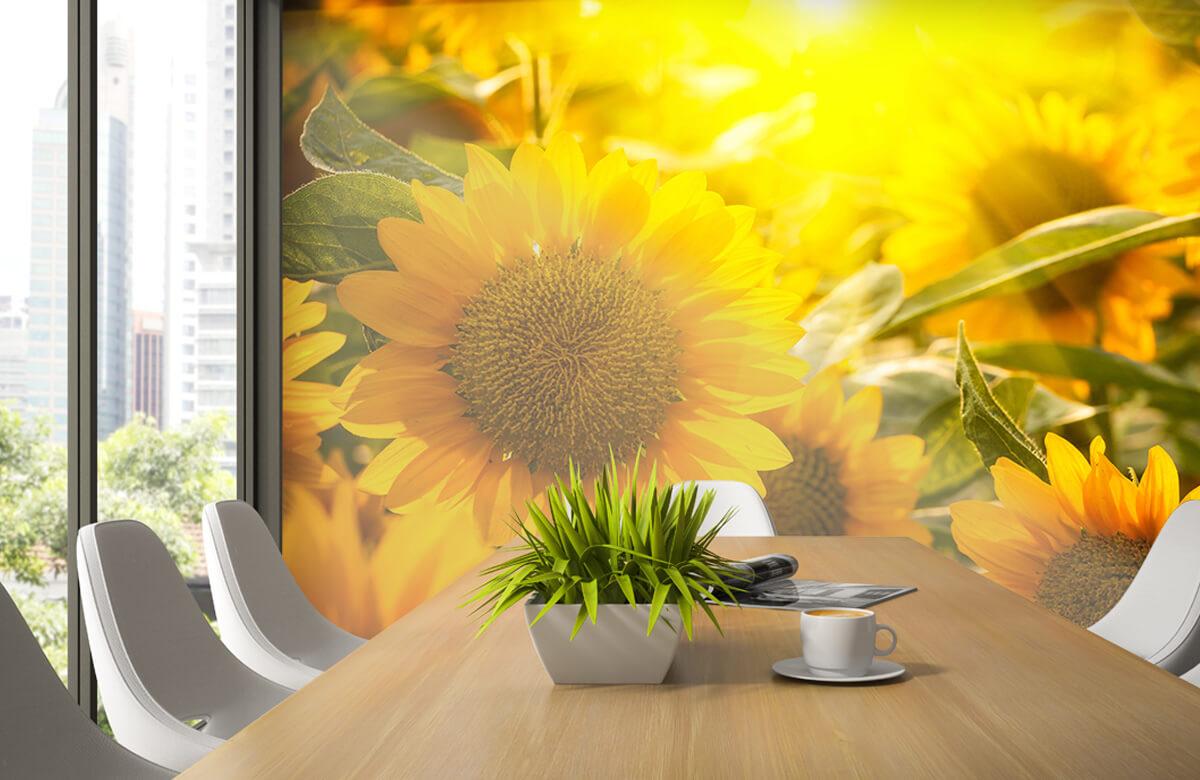 Bloemen, planten en bomen Zonnebloemen en zon 1