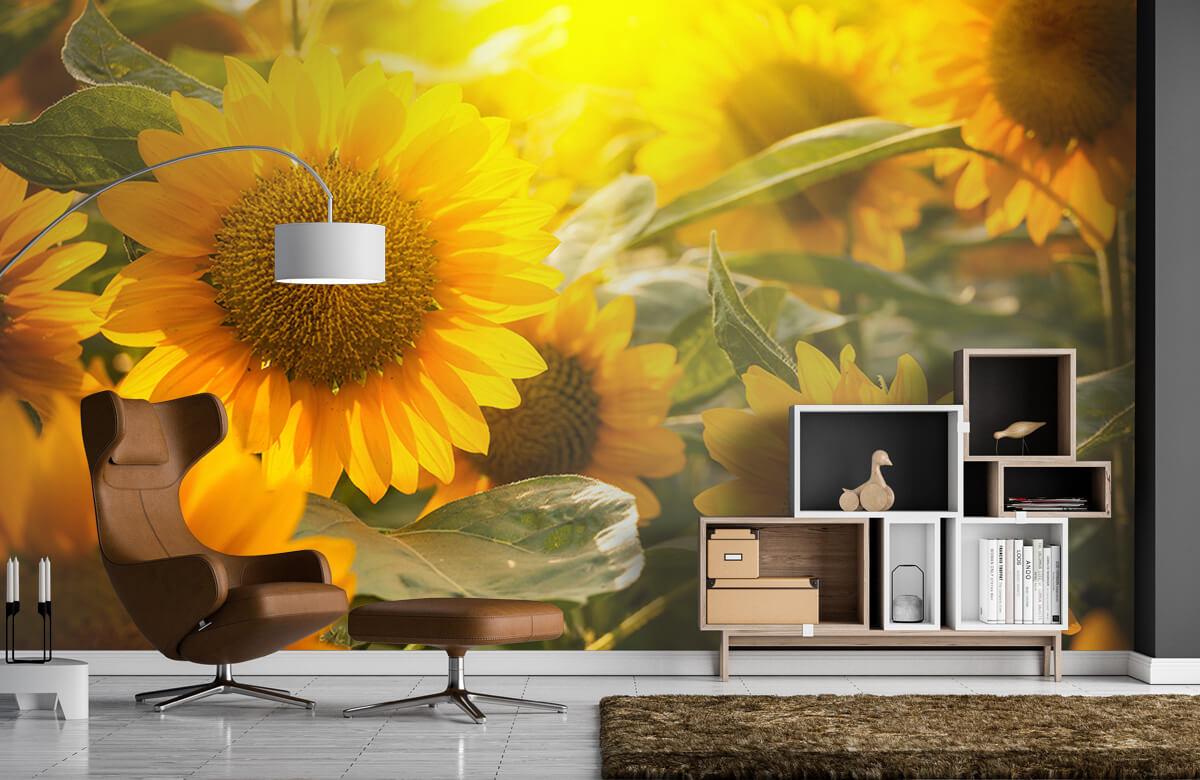 Bloemen, planten en bomen Zonnebloemen en zon 4