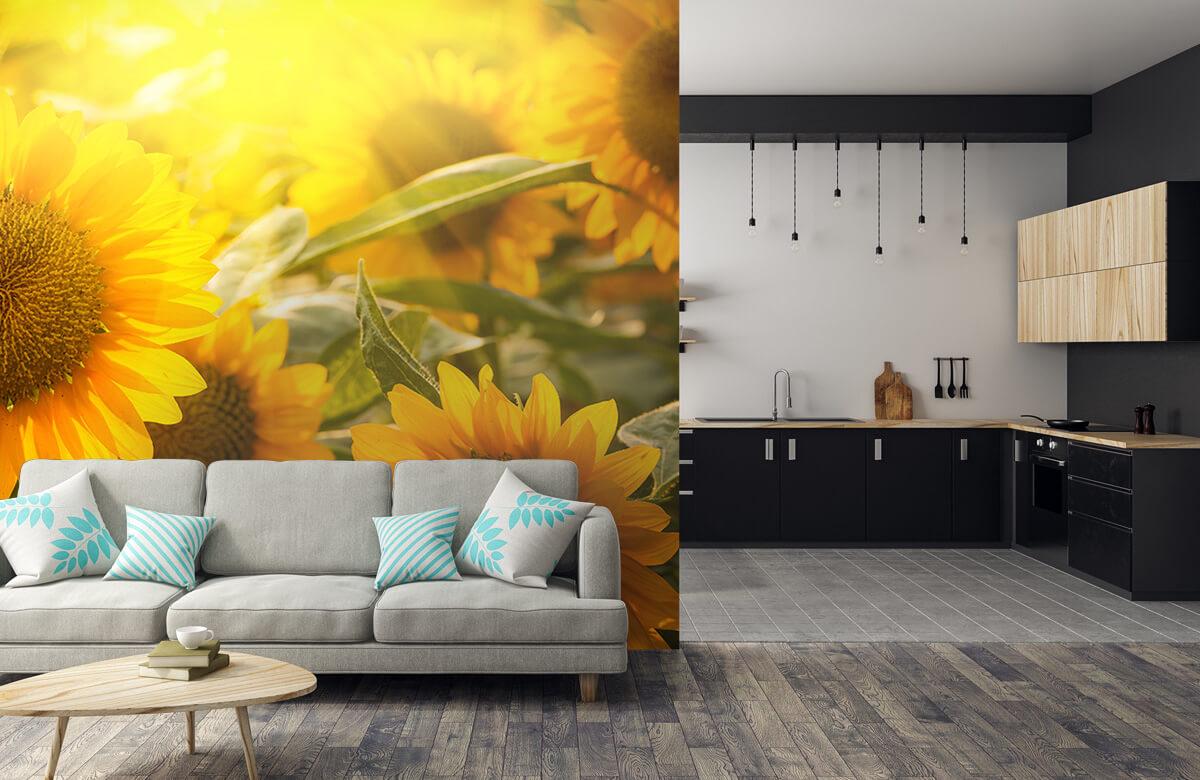 Bloemen, planten en bomen Zonnebloemen en zon 5