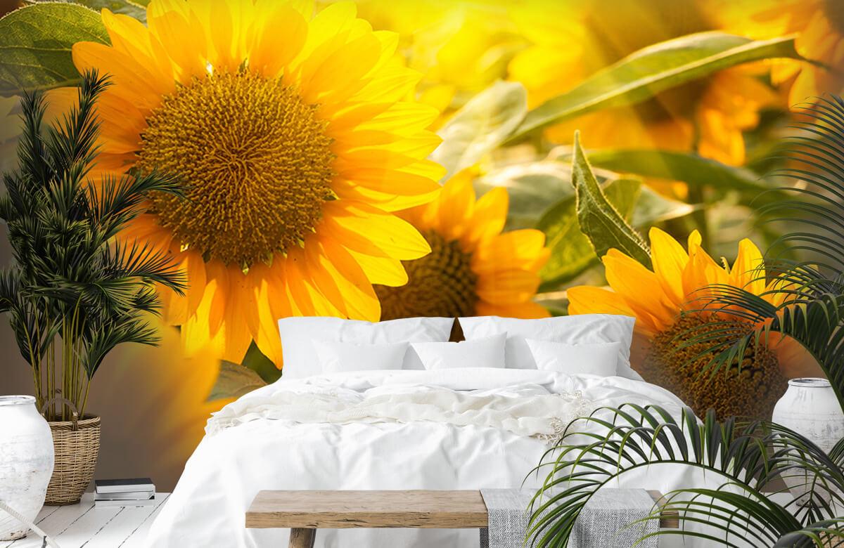 Bloemen, planten en bomen Zonnebloemen en zon 6