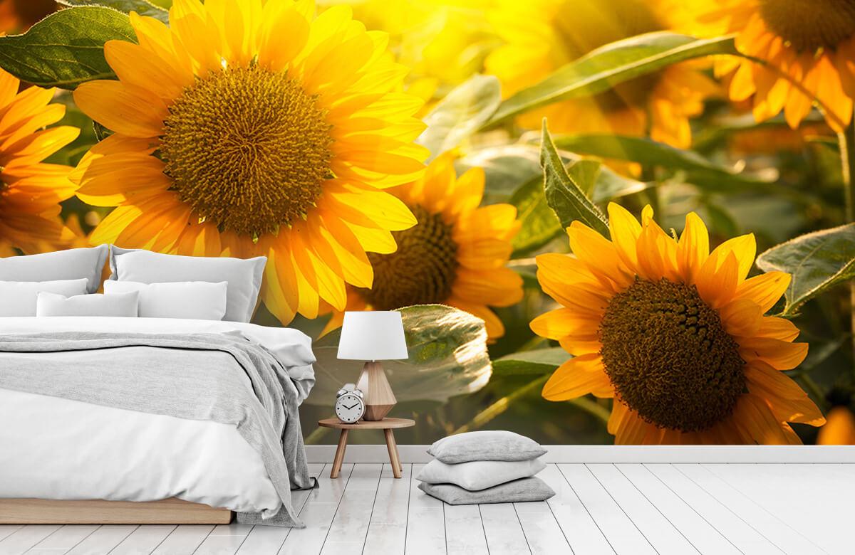 Bloemen, planten en bomen Zonnebloemen en zon 7