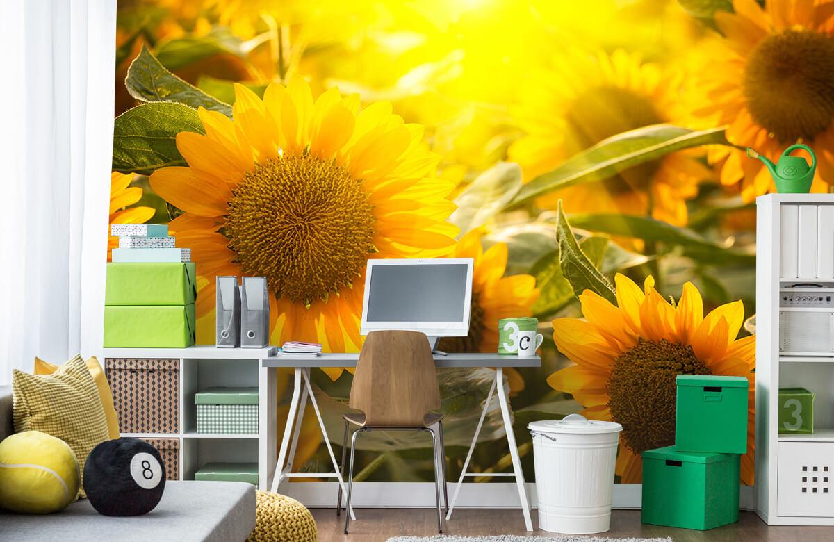 Bloemen, planten en bomen Zonnebloemen en zon 9