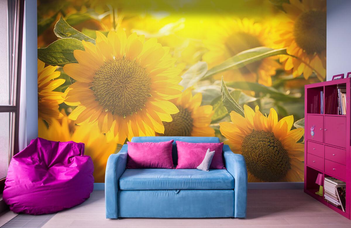 Bloemen, planten en bomen Zonnebloemen en zon 10