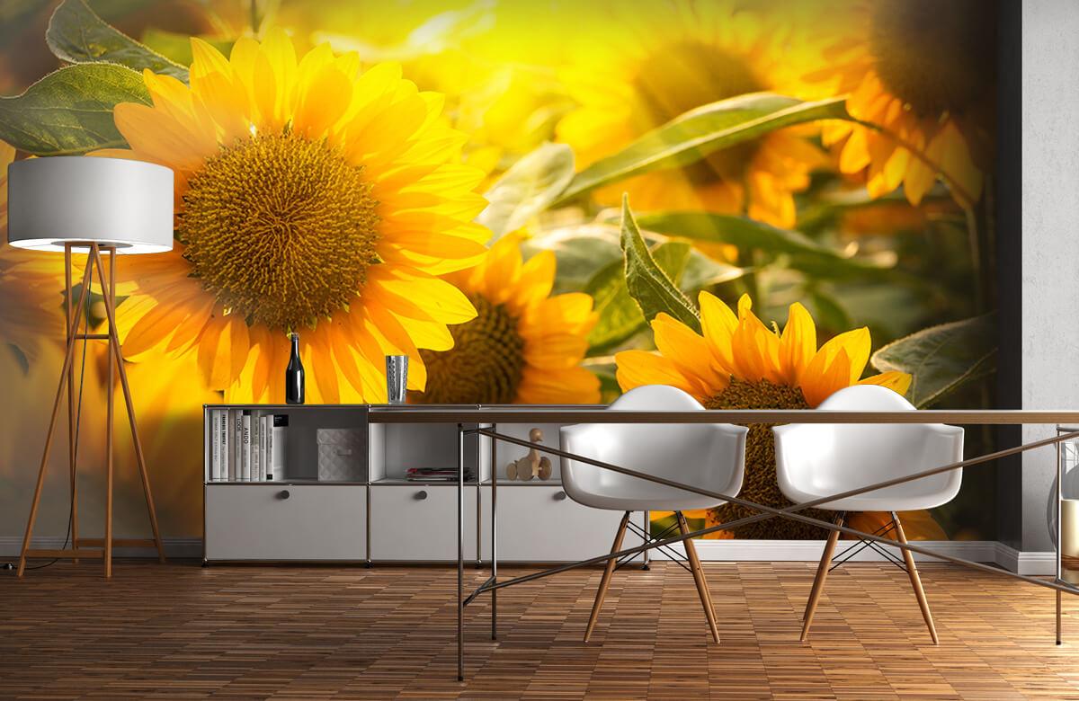 Bloemen, planten en bomen Zonnebloemen en zon 11