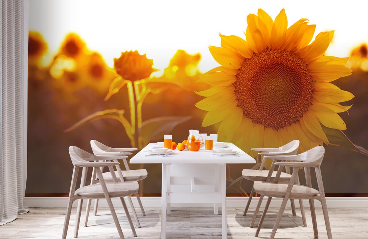 Bloemen, planten en bomen Warm zonnebloemveld 2