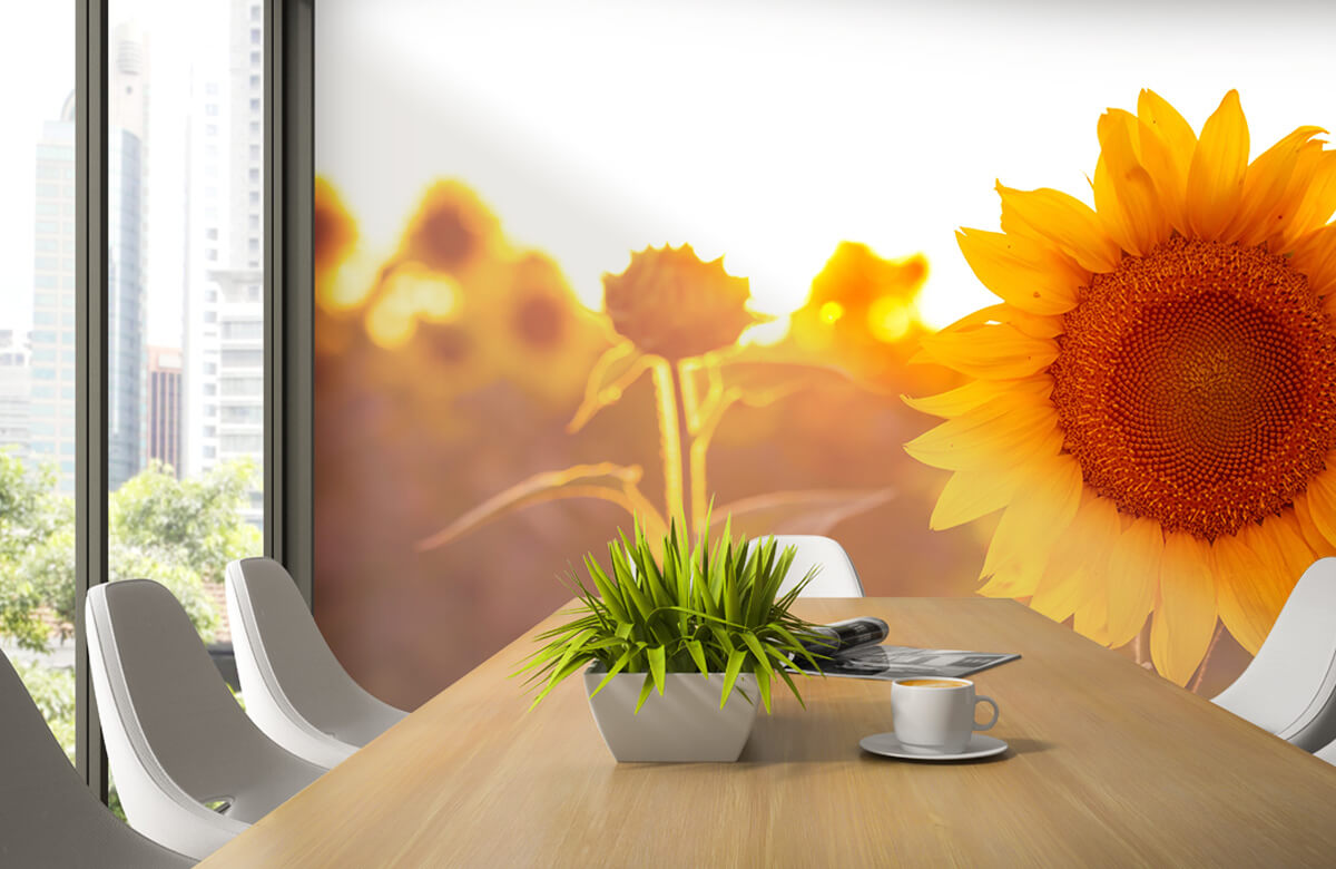Bloemen, planten en bomen Warm zonnebloemveld 3