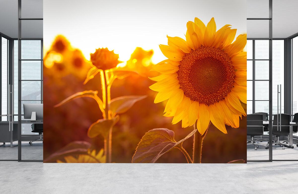 Bloemen, planten en bomen Warm zonnebloemveld 4