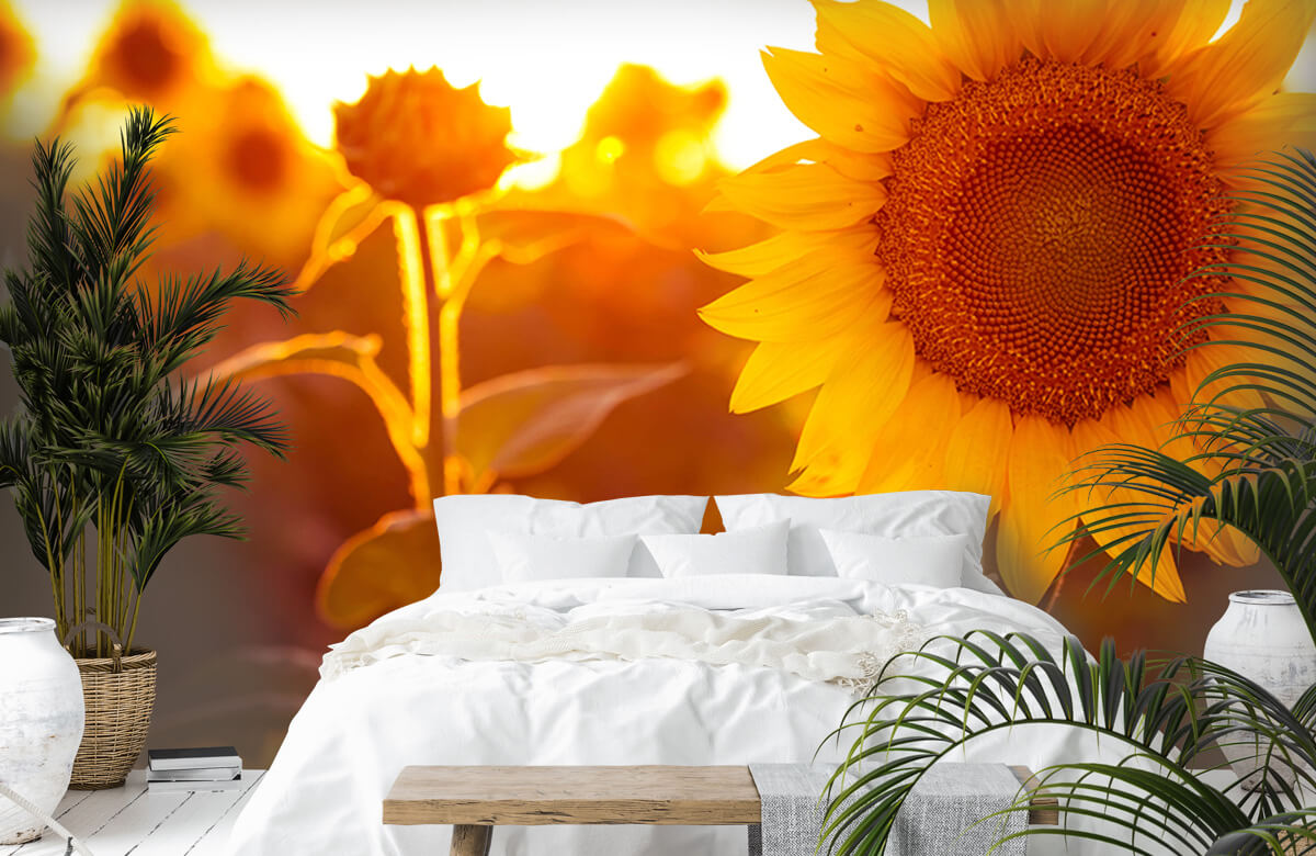 Bloemen, planten en bomen Warm zonnebloemveld 6