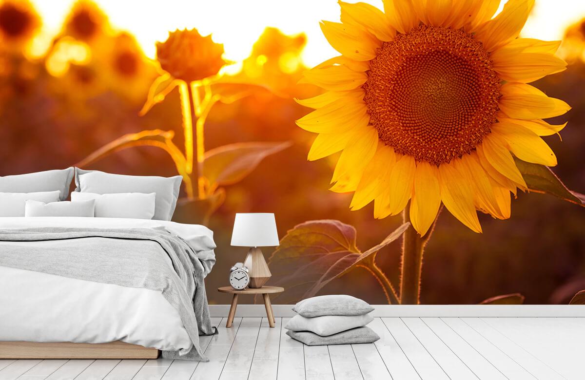 Bloemen, planten en bomen Warm zonnebloemveld 7