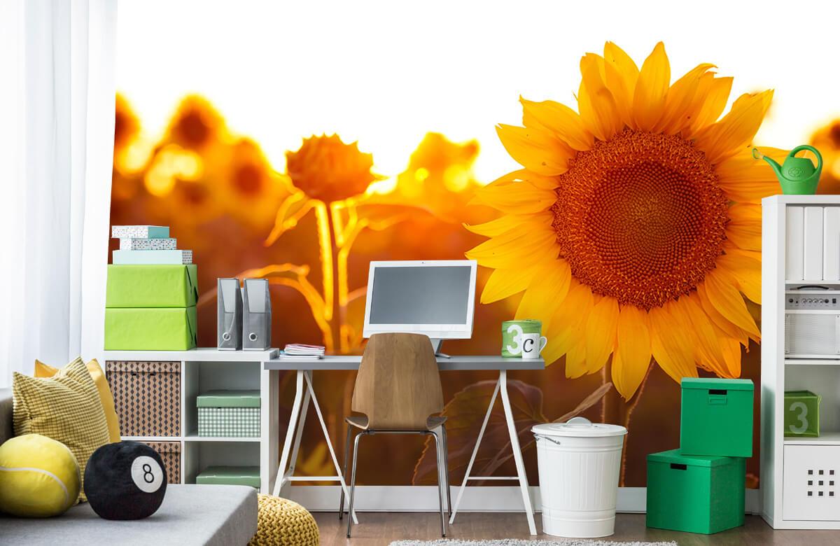 Bloemen, planten en bomen Warm zonnebloemveld 9