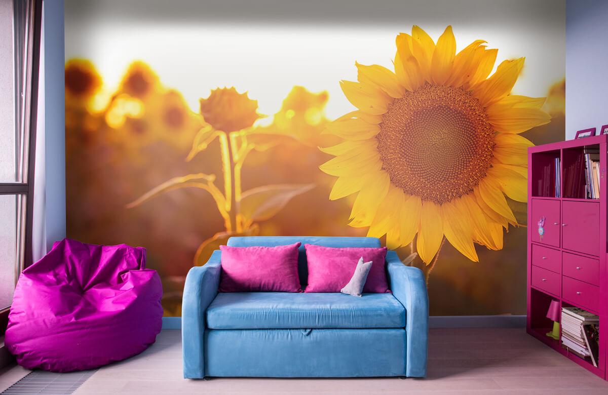 Bloemen, planten en bomen Warm zonnebloemveld 10