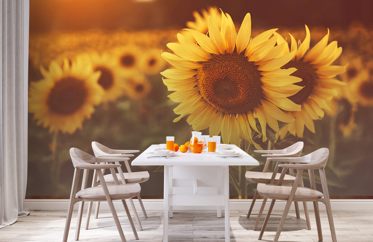 Bloemen, planten en bomen Zonnebloemen in zonlicht 2