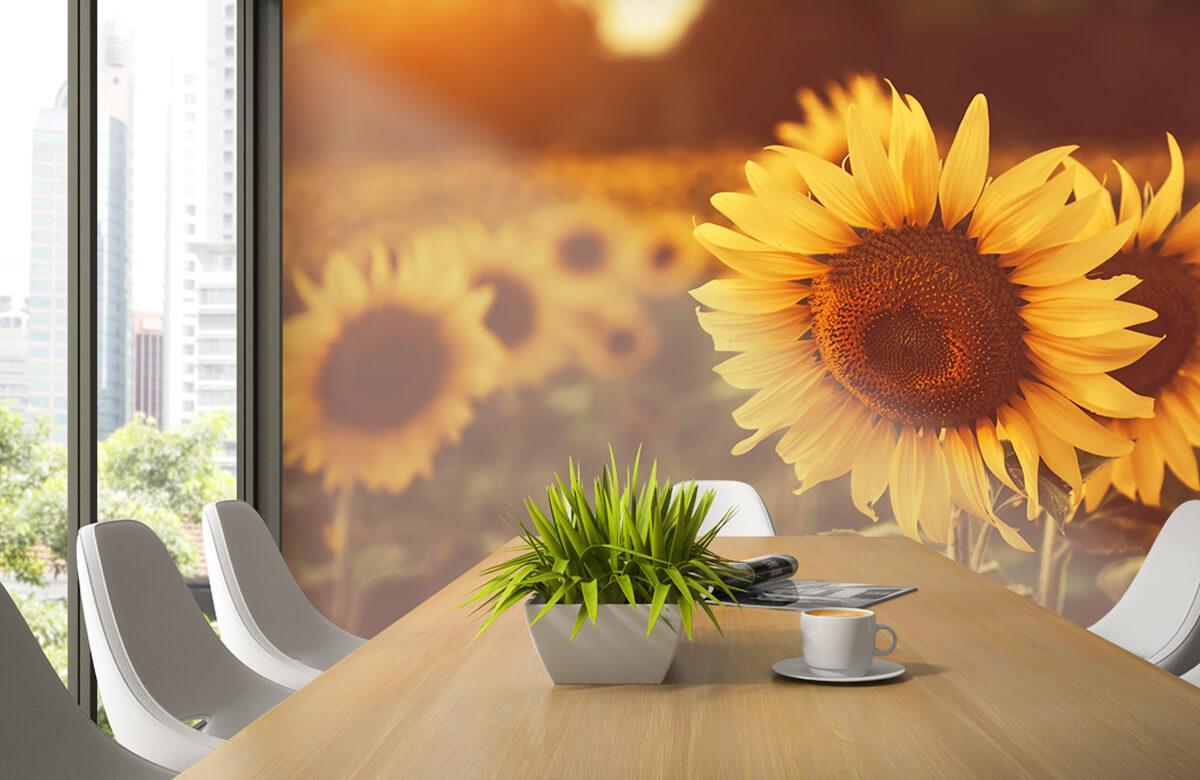 Bloemen, planten en bomen Zonnebloemen in zonlicht 3