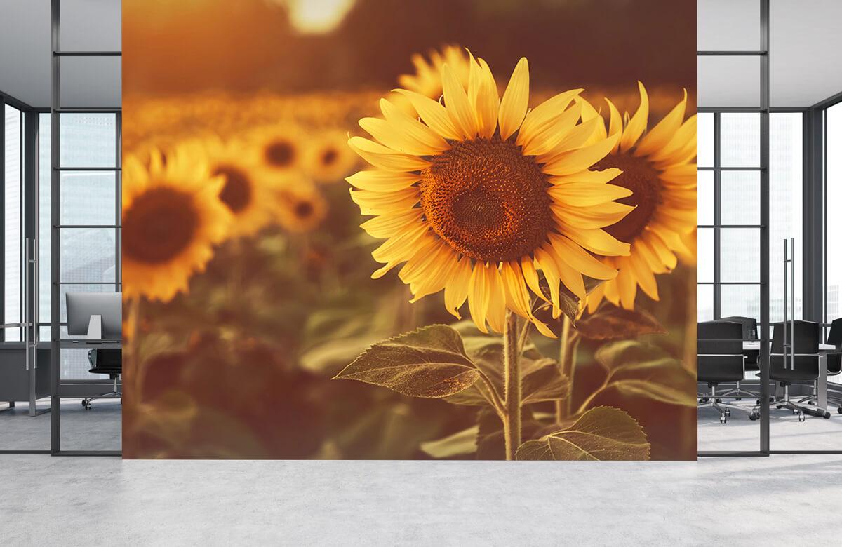 Bloemen, planten en bomen Zonnebloemen in zonlicht 4