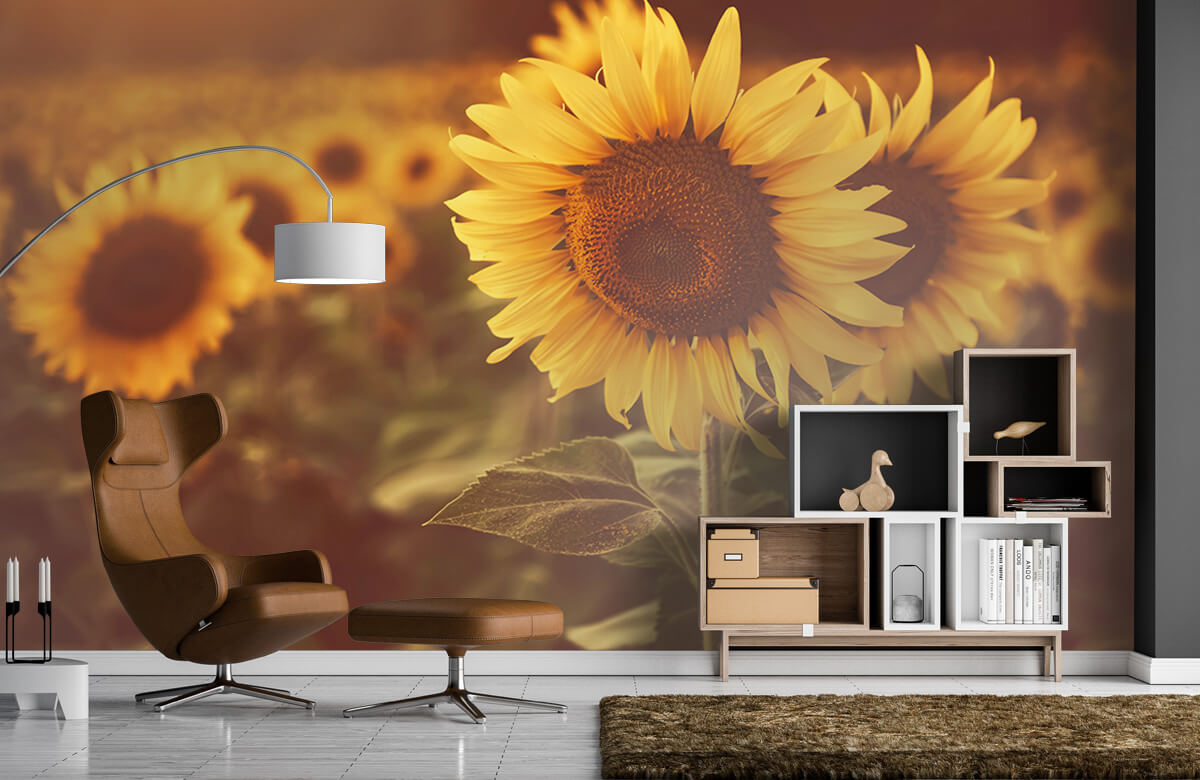 Bloemen, planten en bomen Zonnebloemen in zonlicht 1