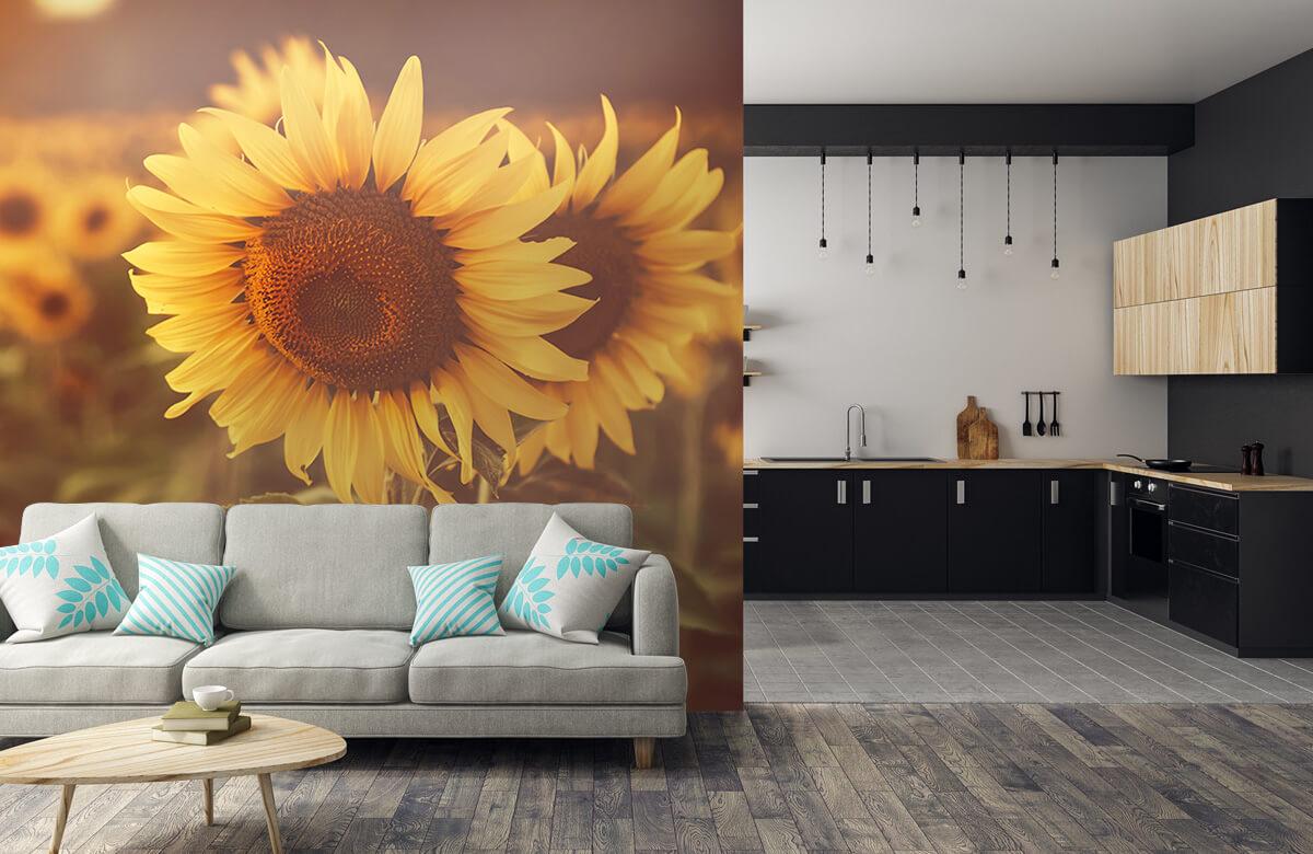 Bloemen, planten en bomen Zonnebloemen in zonlicht 5