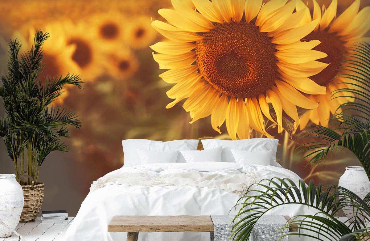Bloemen, planten en bomen Zonnebloemen in zonlicht 6
