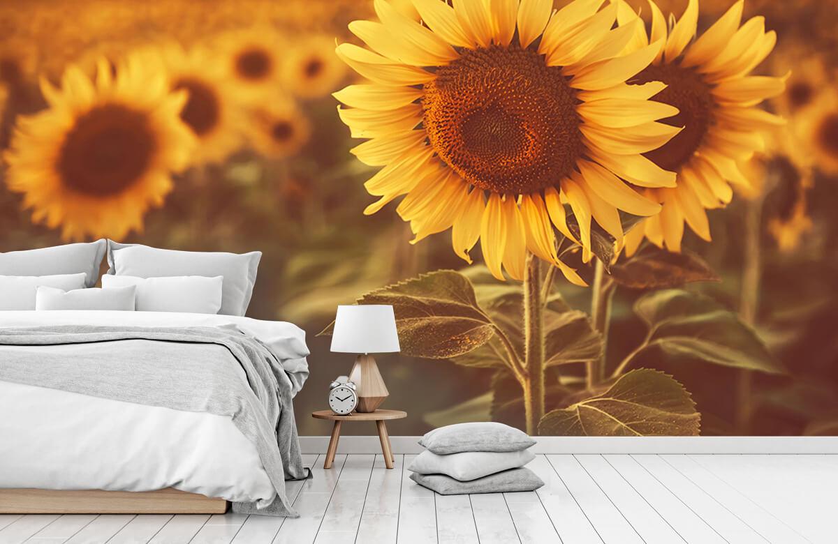 Bloemen, planten en bomen Zonnebloemen in zonlicht 7
