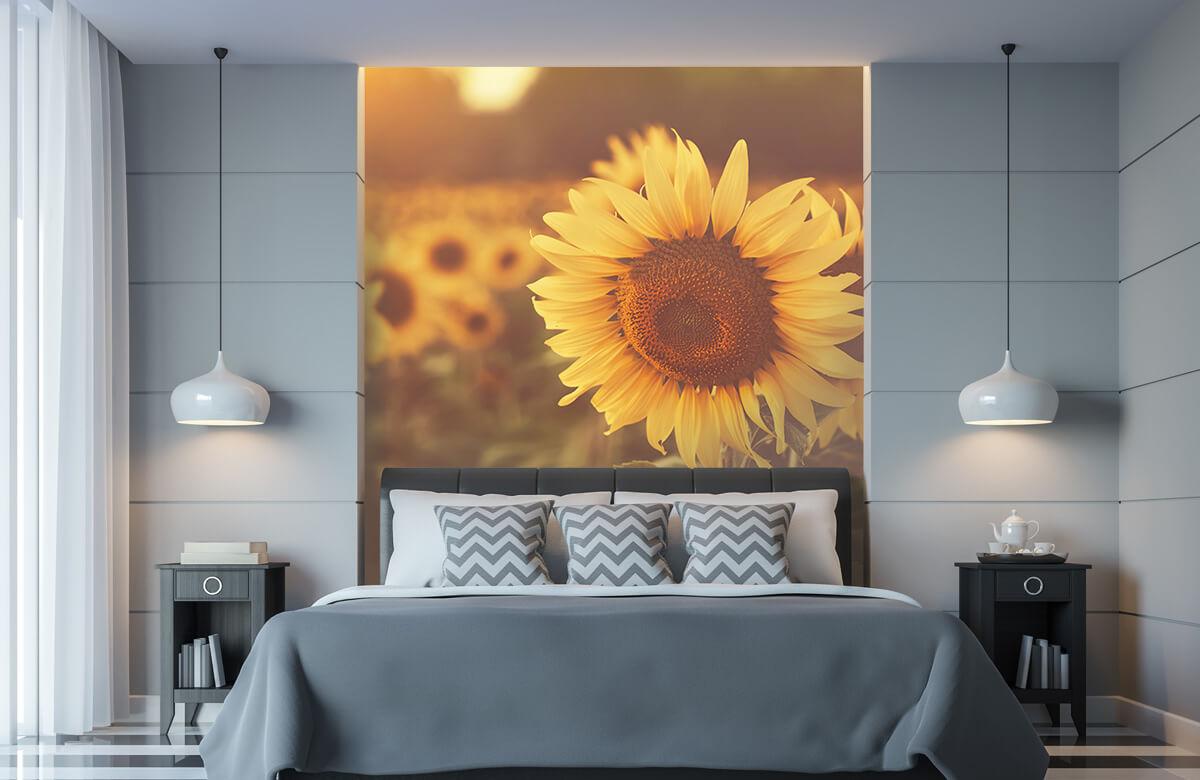 Bloemen, planten en bomen Zonnebloemen in zonlicht 8