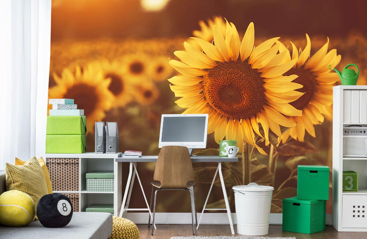 Bloemen, planten en bomen Zonnebloemen in zonlicht 9