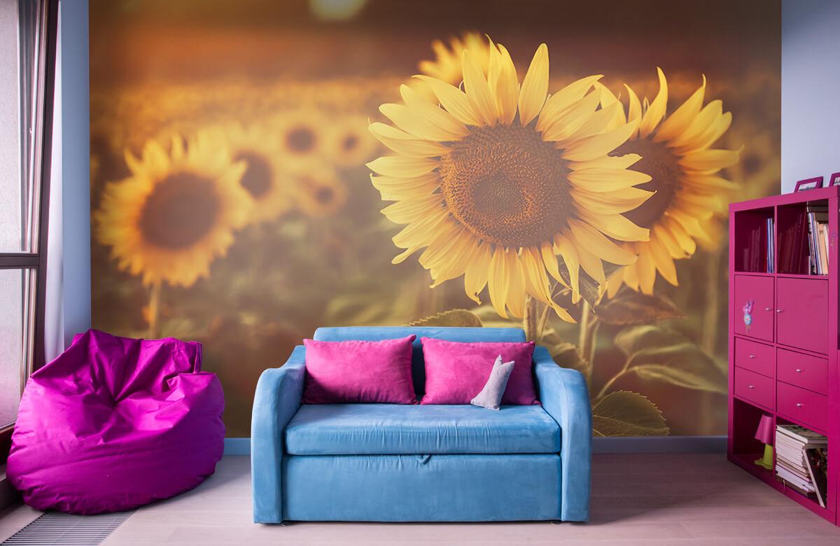 Bloemen, planten en bomen Zonnebloemen in zonlicht 10