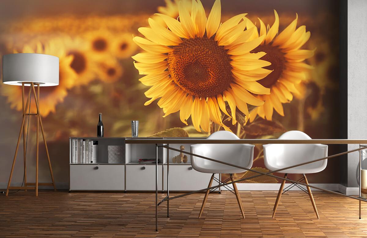 Bloemen, planten en bomen Zonnebloemen in zonlicht 11