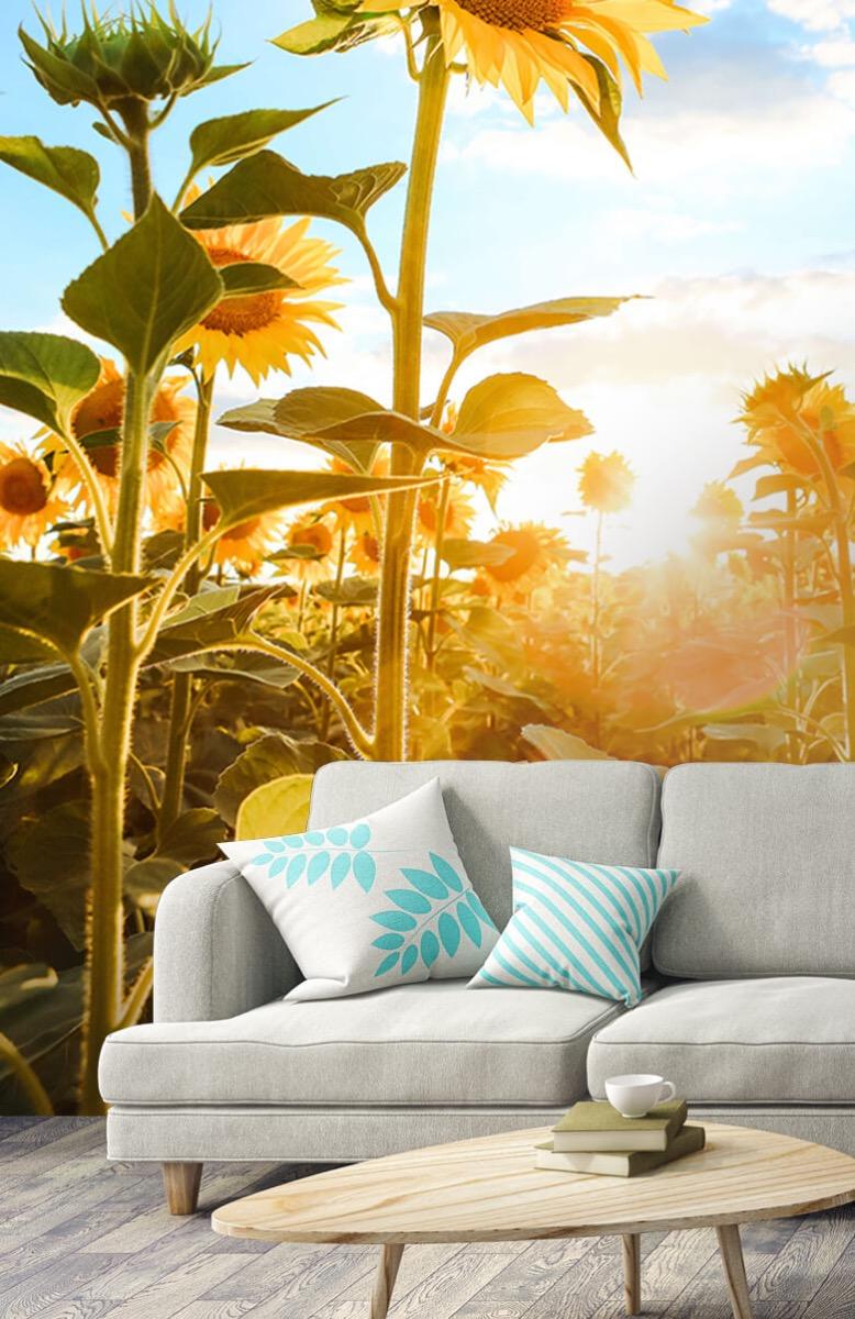 Bloemen, planten en bomen Zonnebloem met blauwe lucht 3