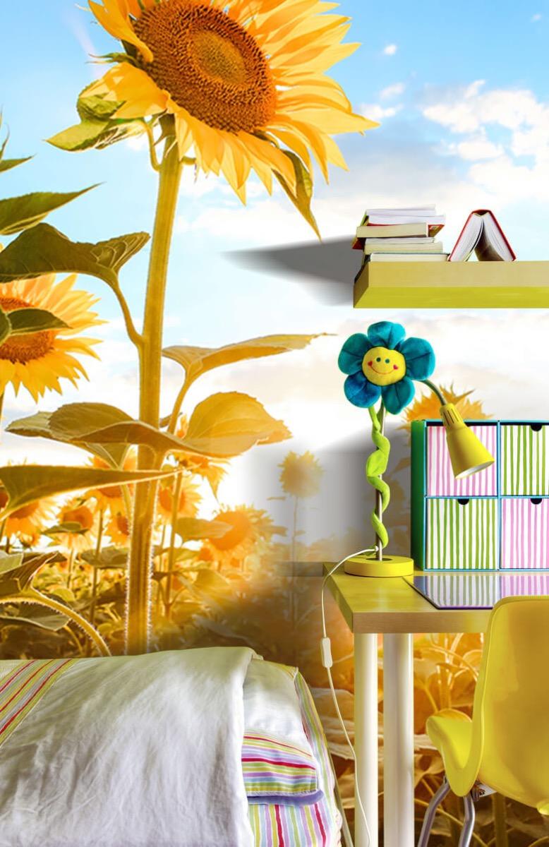 Bloemen, planten en bomen Zonnebloem met blauwe lucht 8