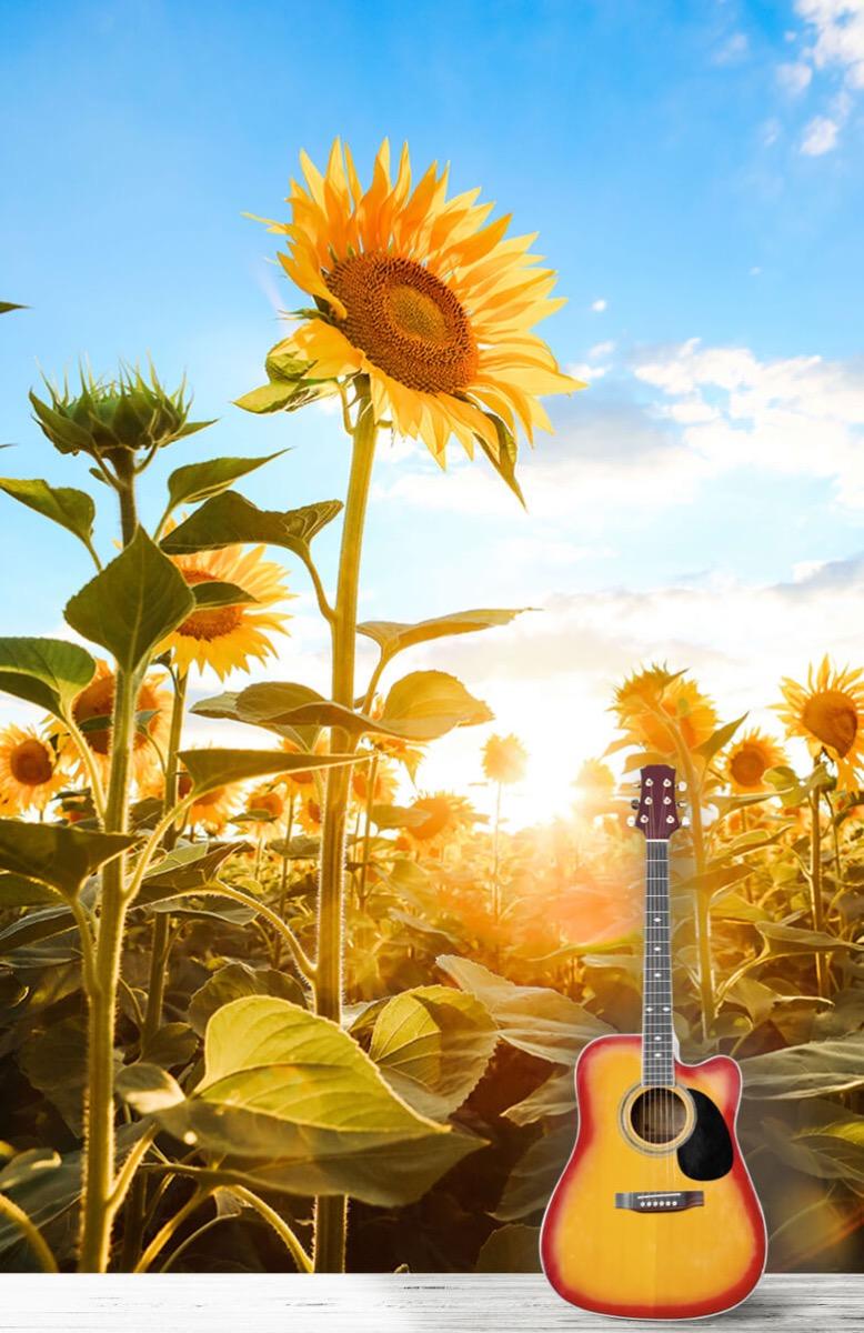 Bloemen, planten en bomen Zonnebloem met blauwe lucht 11