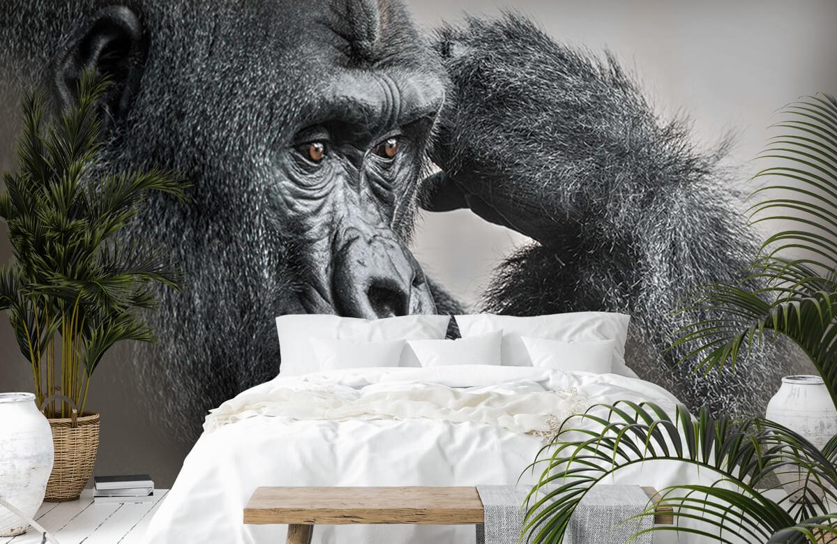Dieren Gorilla zwart-wit 7