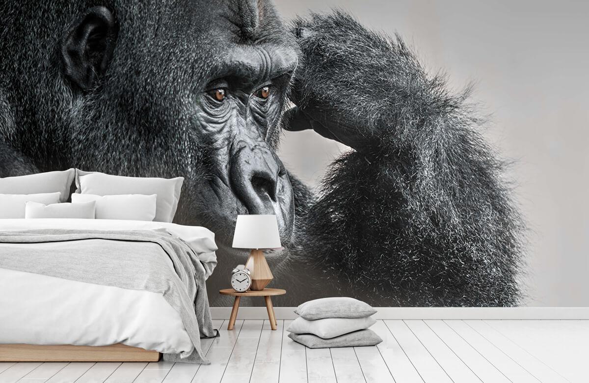Dieren Gorilla zwart-wit 1