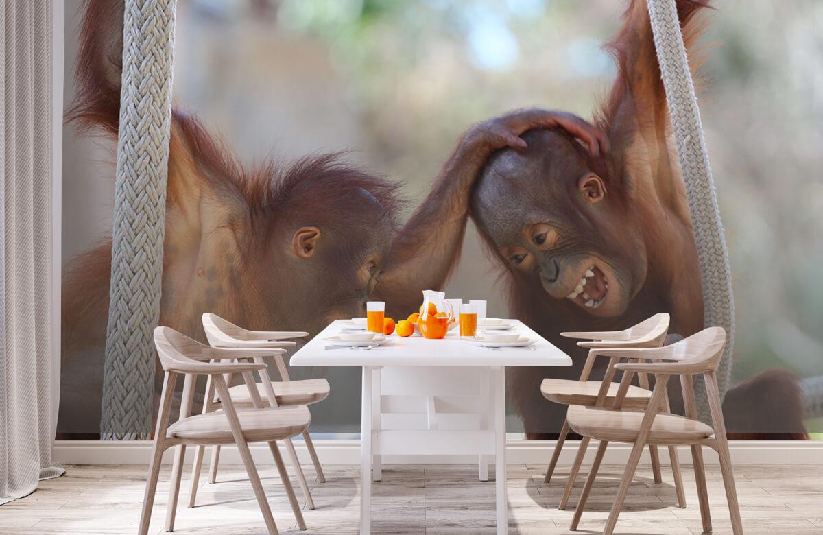 Dieren Baby orang oetans 2