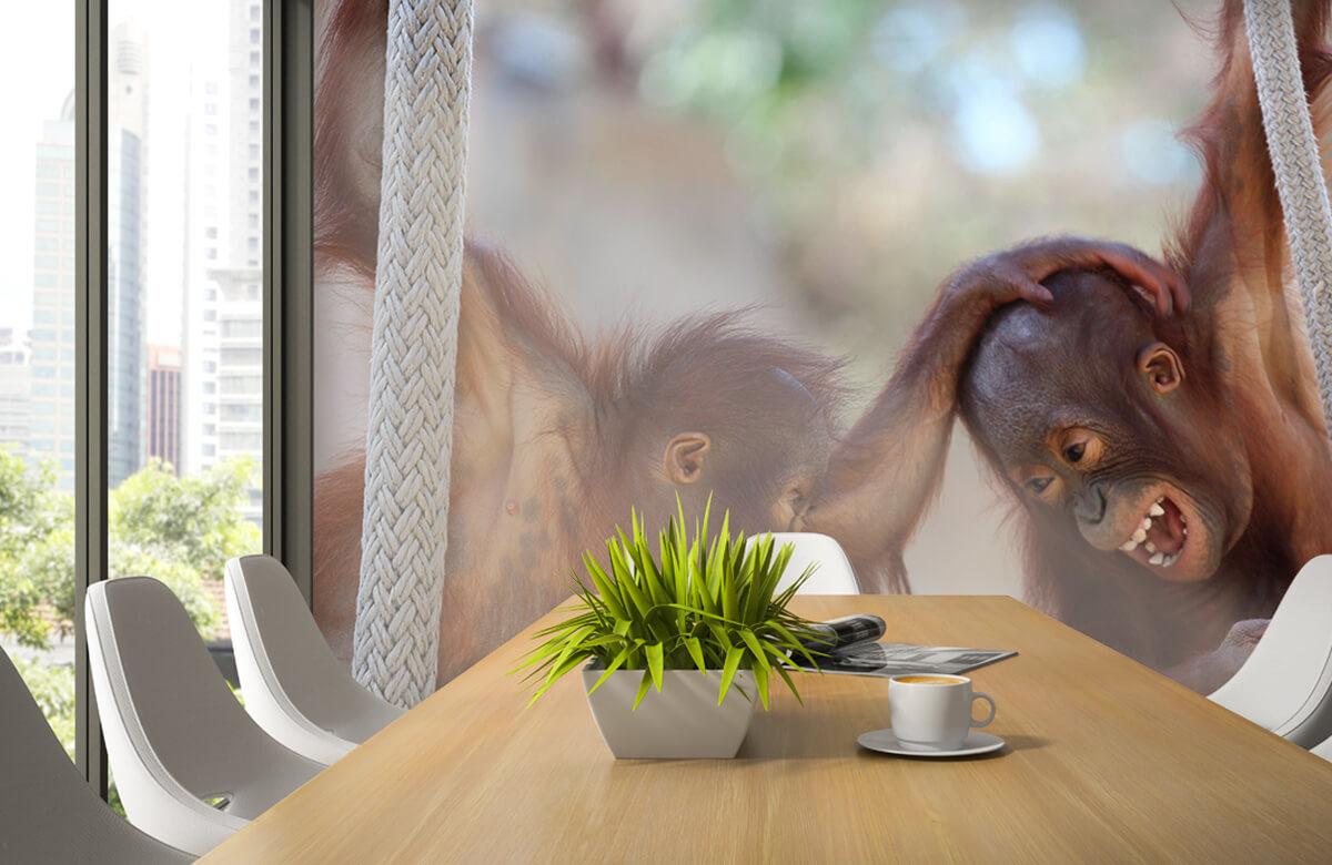 Dieren Baby orang oetans 3