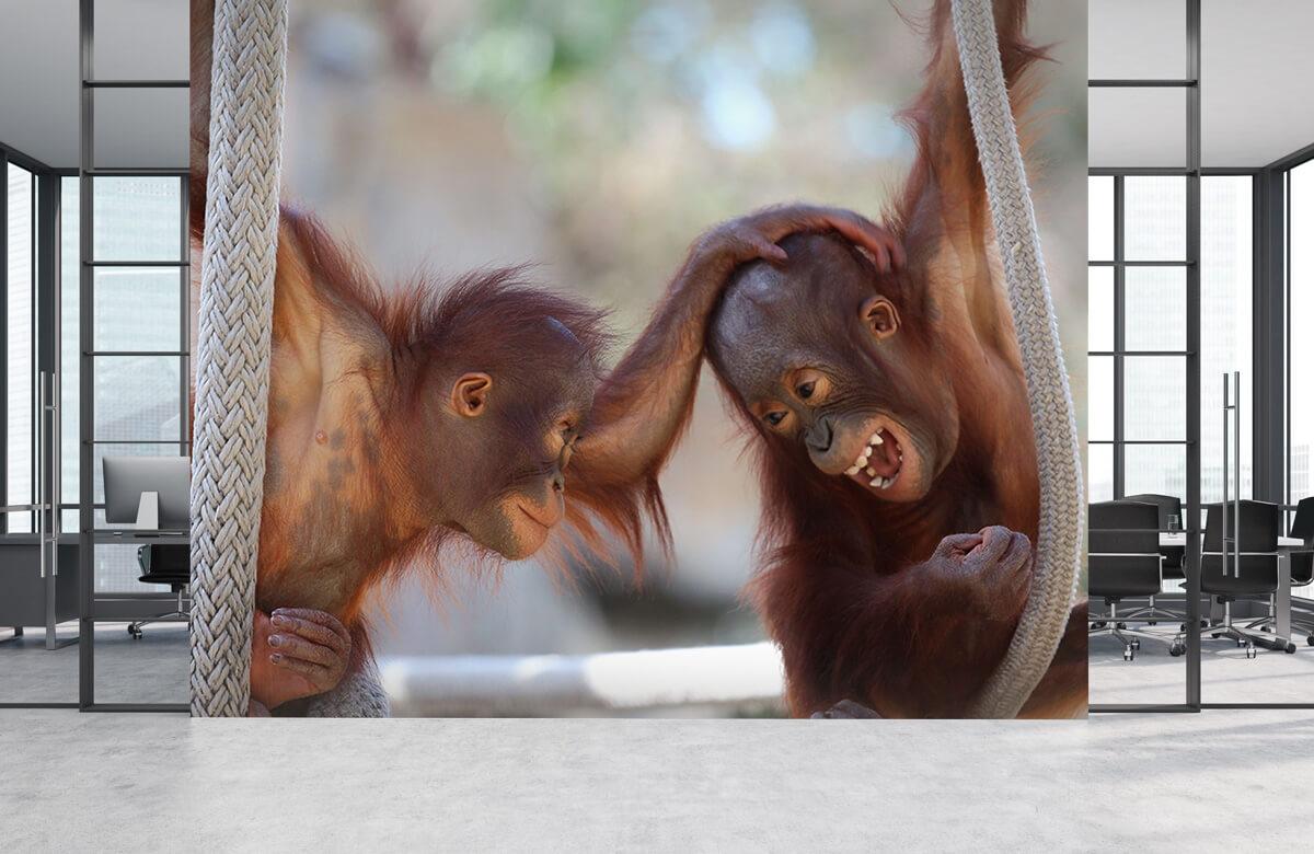 Dieren Baby orang oetans 4