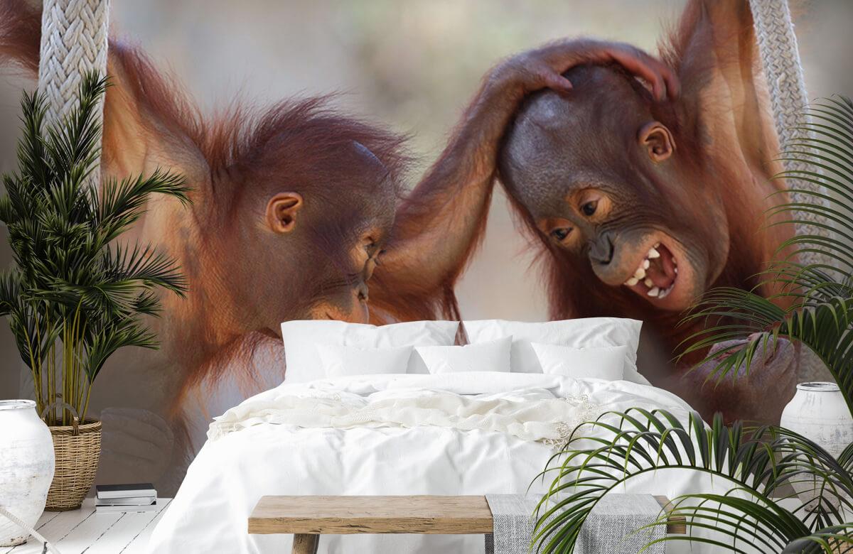 Dieren Baby orang oetans 7