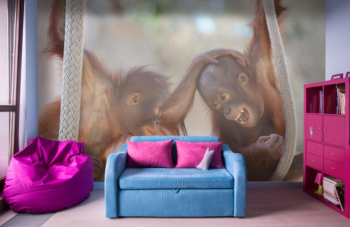 Dieren Baby orang oetans 10
