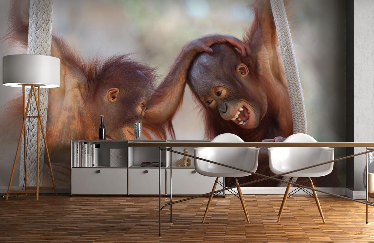 Dieren Baby orang oetans 11