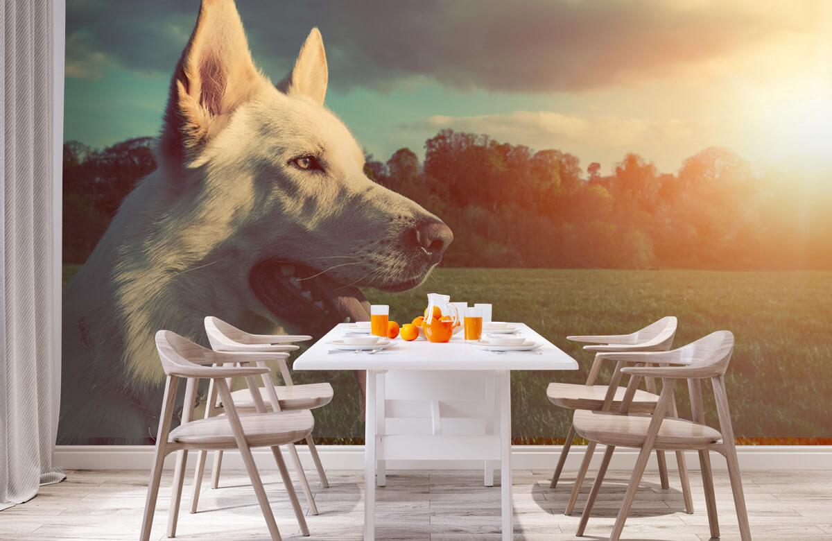 Dieren Witte hond 2