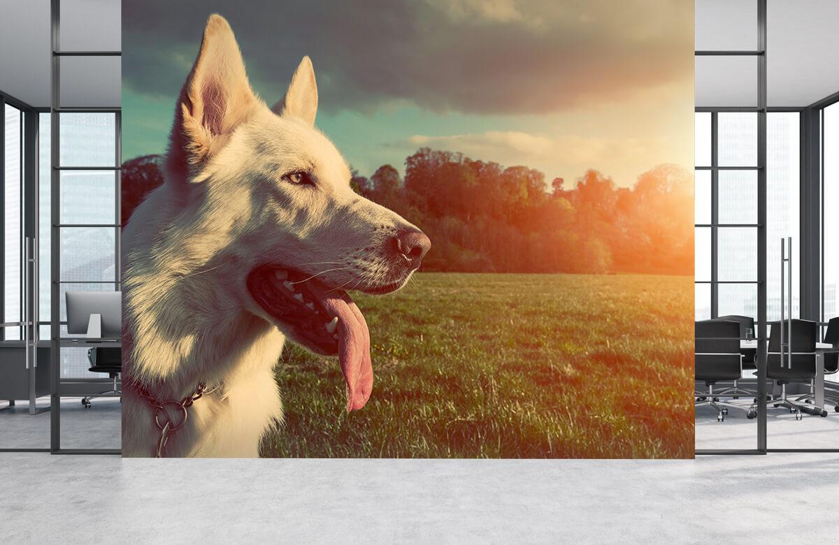 Dieren Witte hond 1