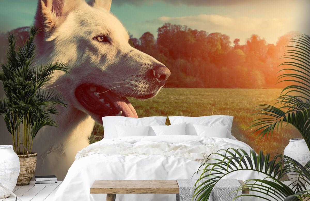 Dieren Witte hond 6