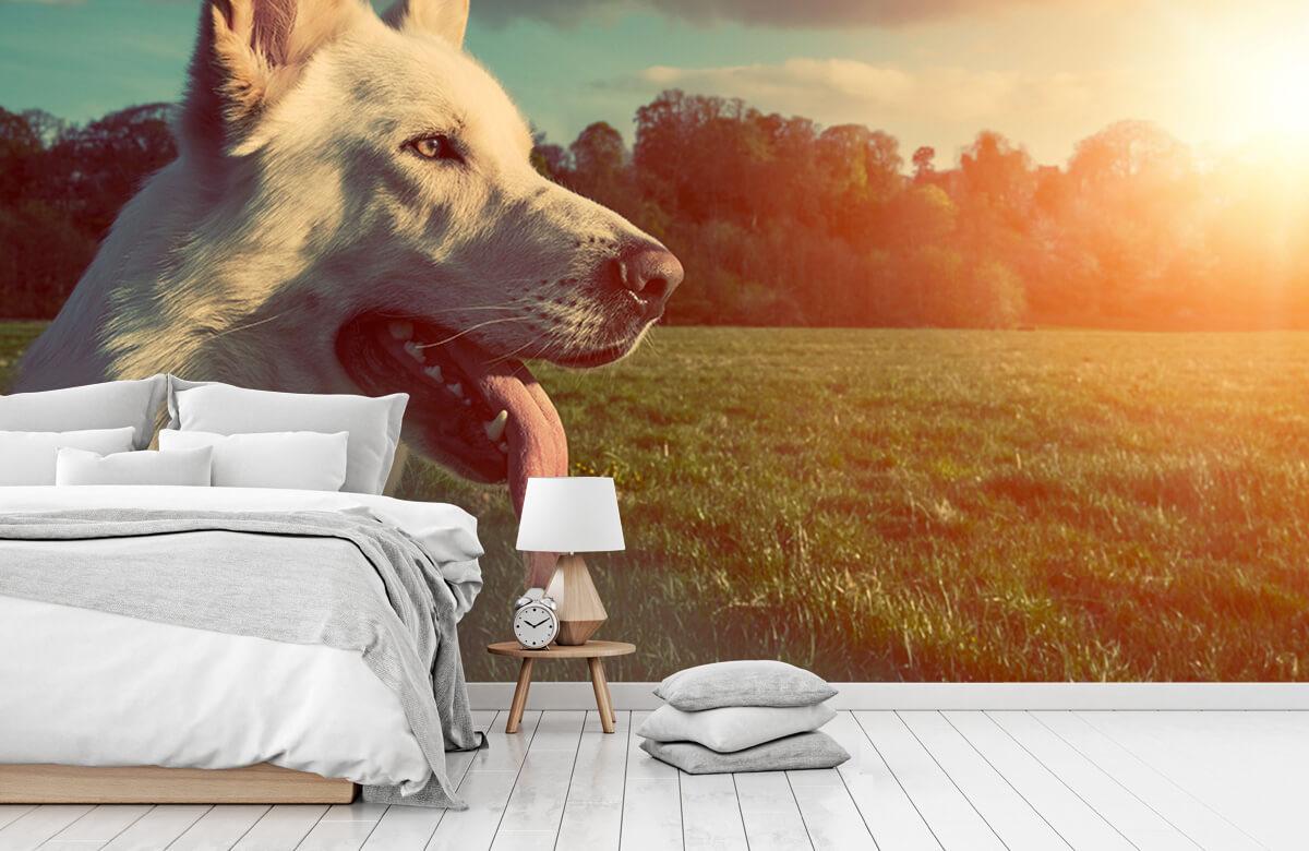 Dieren Witte hond 7