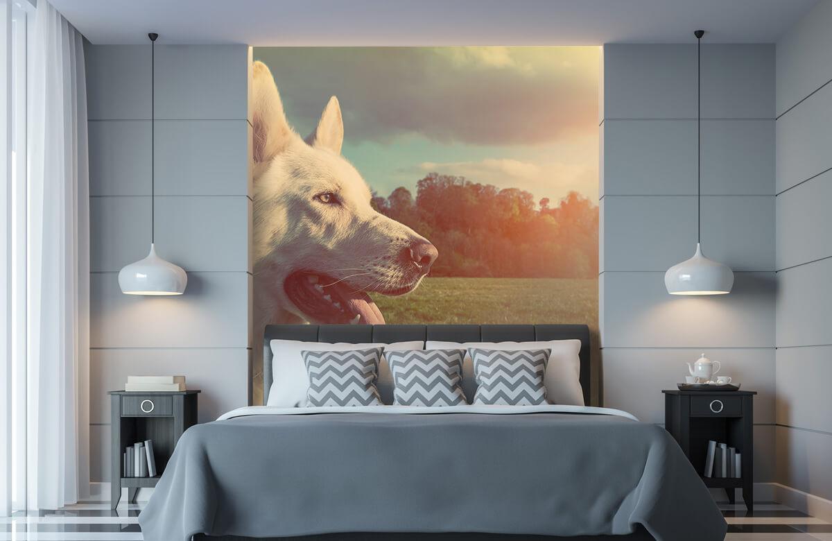 Dieren Witte hond 8