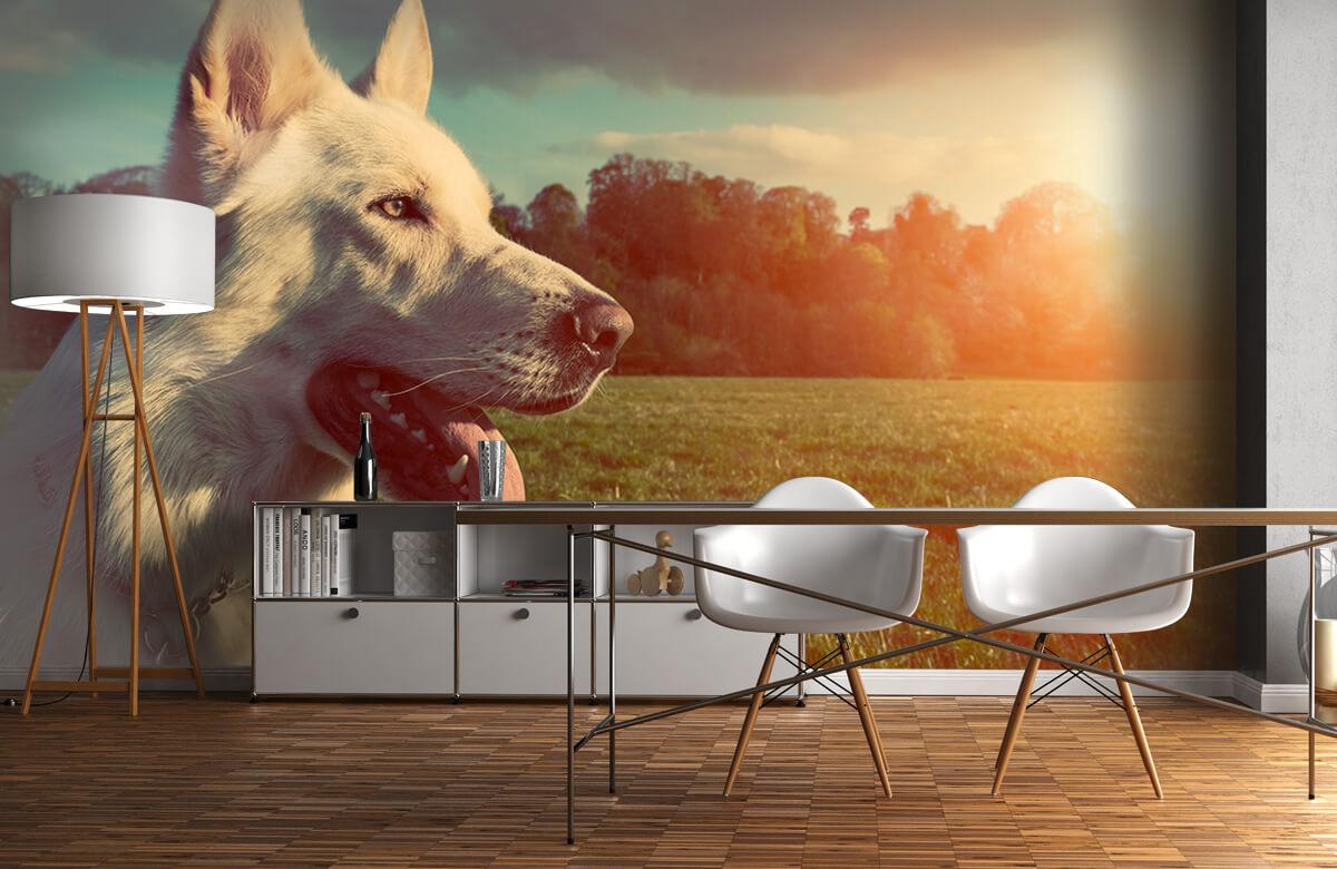 Dieren Witte hond 11