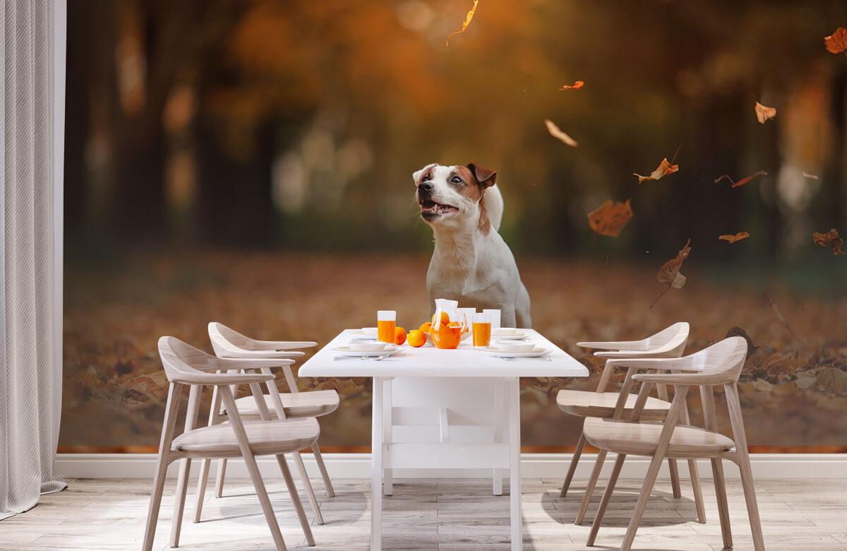 Dieren Jack Russell Terriër in de herfst 2