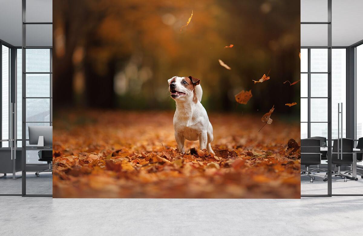Dieren Jack Russell Terriër in de herfst 3