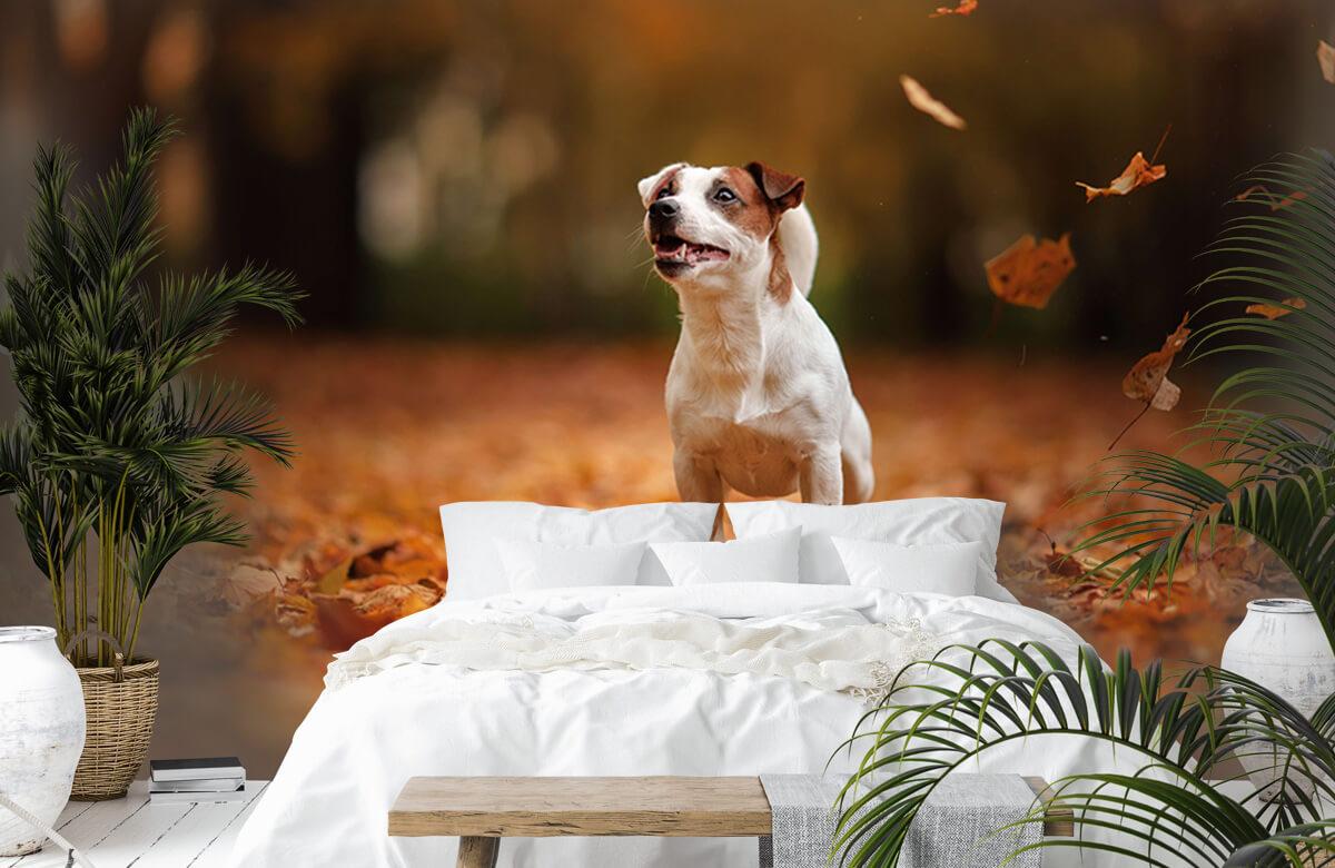 Dieren Jack Russell Terriër in de herfst 6