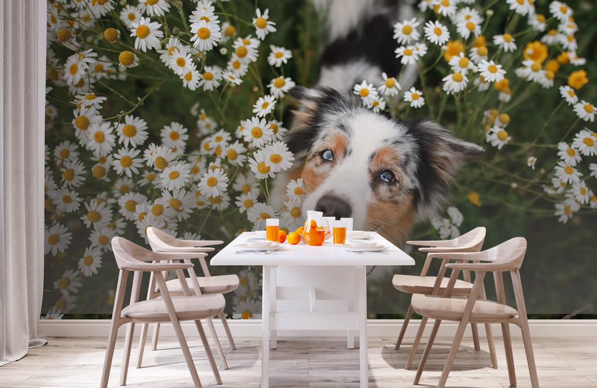 Dieren Australische herder tussen de bloemen 2