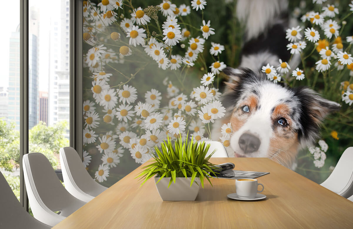 Dieren Australische herder tussen de bloemen 3