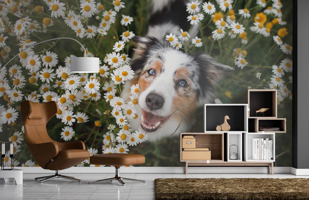 Dieren Australische herder tussen de bloemen 5